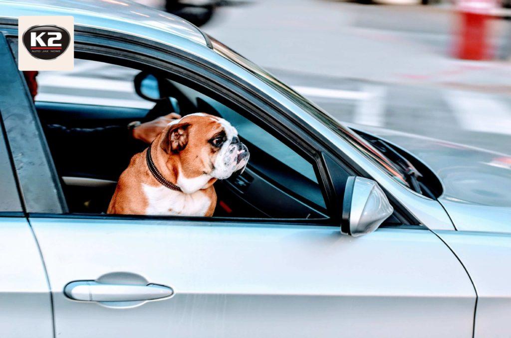 Zapach psa w samochodzie