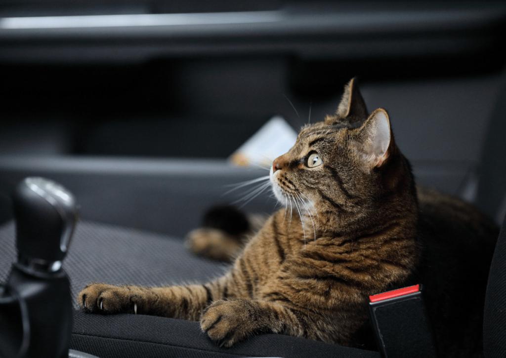 zapach kota w samochodzie
